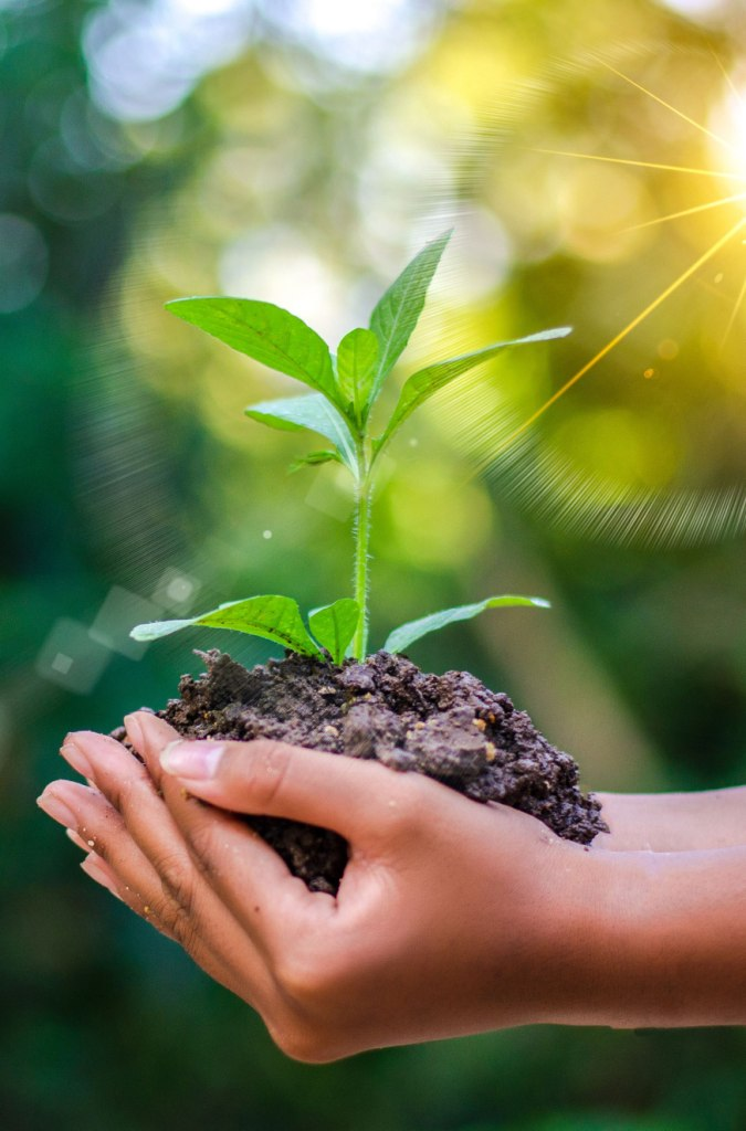 compostable products manufacturers in Udaipur india